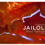 jailolo-cover